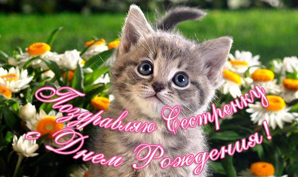 Прикольные поздравления с днем рождения сестре миленький котёнок